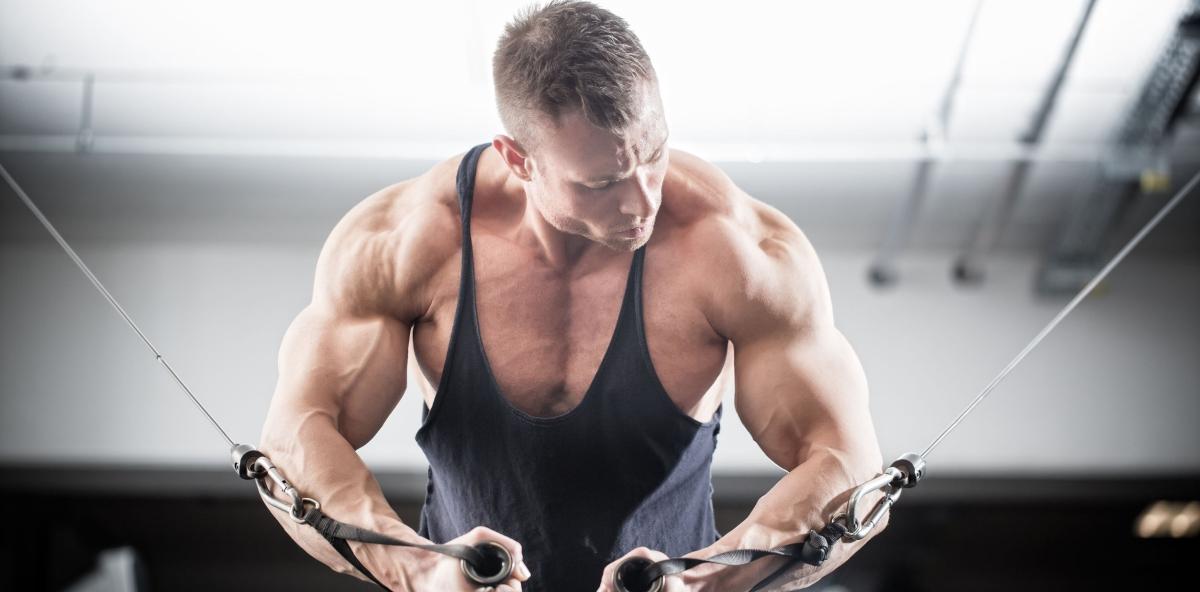 Wie funktioniert Muskelaufbau?