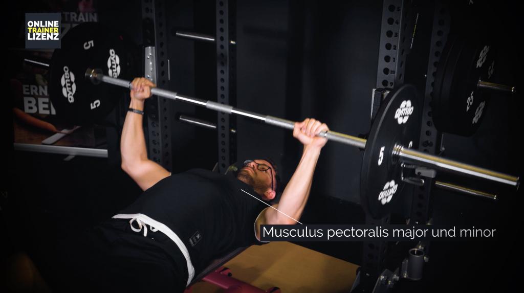 Der Musculus pectoralis major und minor werden beim Bankdrücken hauptsächlich beansprucht.