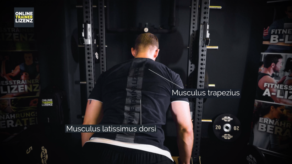 Der Musculus trapezius und der Musculus latissimus dorsi werden beim Langhantelrudern hauptsächlich beansprucht.