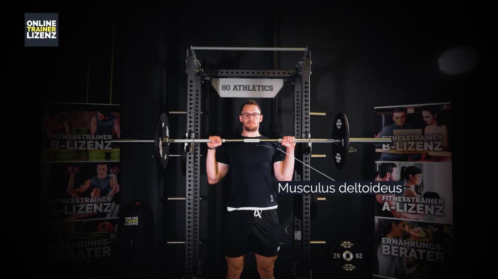 Der Musculus deltoideus wird beim Schulterdrücken am stärksten beansprucht.